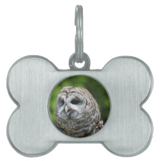 Barred Owl Pet ID Tag