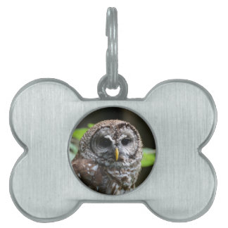 Barred Owl Pet Tags
