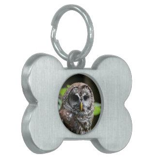 Barred Owl Pet Name Tag