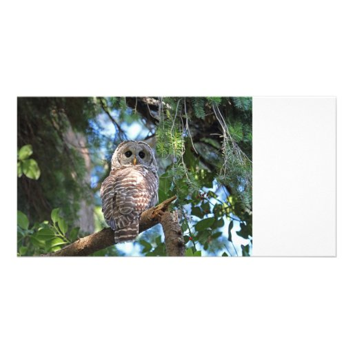 Barred Owl Photo Greeting Card