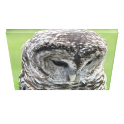 Premium Wrapped Canvas with Barred Owl Portraits design