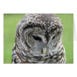 Greeting Card with Barred Owl Portraits design