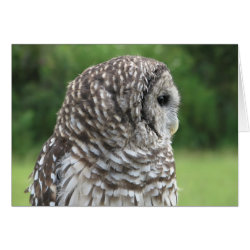 Barred Owl Portrait Card