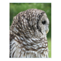 Postcard with Barred Owl Portraits design