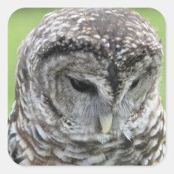 Square Sticker with Barred Owl Portraits design