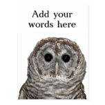 Barred Owl Postcards