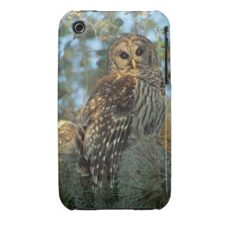 Barred Owl roosting in some Spanish Moss iPhone 3 Cases