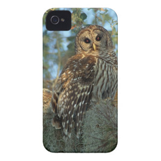 Barred Owl roosting in some Spanish Moss iPhone 4 Case