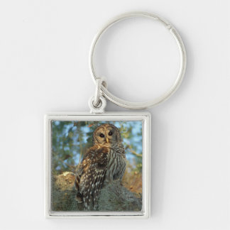 Barred Owl roosting in some Spanish Moss Keychain