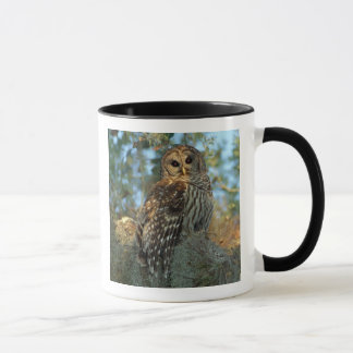 Barred Owl roosting in some Spanish Moss Mug