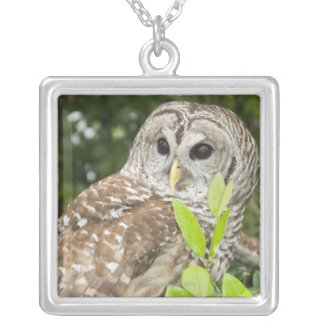 Barred Owl Silver Plated Necklace