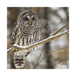 Barred Owl Snow Falling Canvas Print