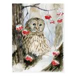Barred owl snow winter postcards