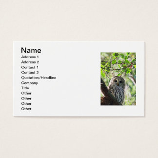 Barred Owl Staring Business Card