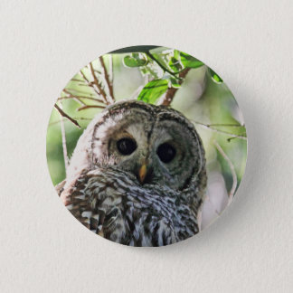 Barred Owl Staring Button