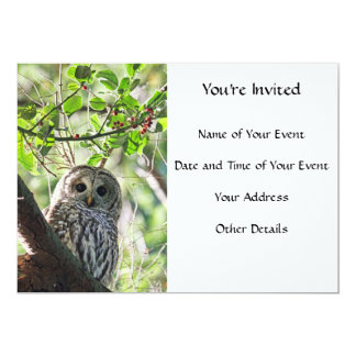 Barred Owl Staring Card