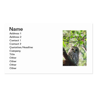 Barred Owl Staring Double-Sided Standard Business Cards (Pack Of 100)