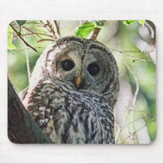 Barred Owl Staring Mouse Pad