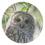 Barred Owl Staring Party Plates