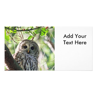 Barred Owl Staring Customized Photo Card