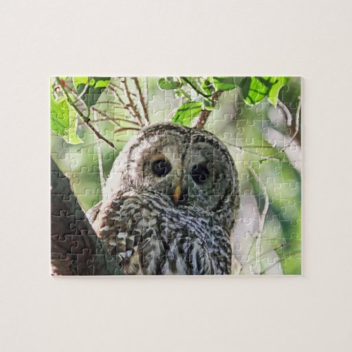 Barred Owl Staring Puzzle