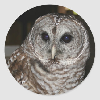 Barred Owl Stickers
