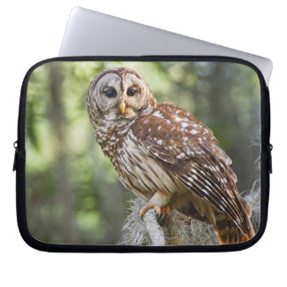 Barred Owl (Strix varia), adult in old growth Computer Sleeve