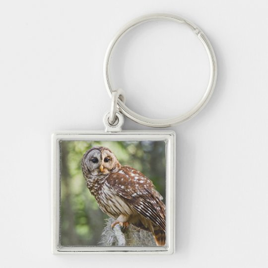 Barred Owl (Strix varia), adult in old growth Keychain