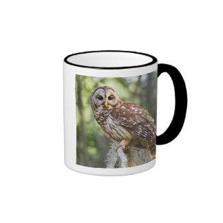 Barred Owl (Strix varia), adult in old growth Ringer Mug
