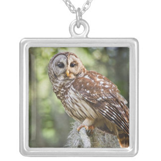 Barred Owl (Strix varia), adult in old growth Silver Plated Necklace