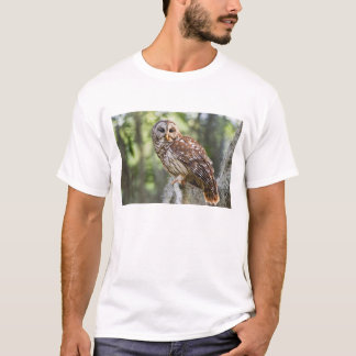 Barred Owl (Strix varia), adult in old growth T-Shirt