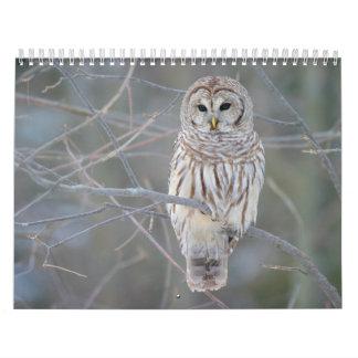 Barred Owl Strix Varia Calendar