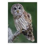 Barred Owl (Strix varia) Card