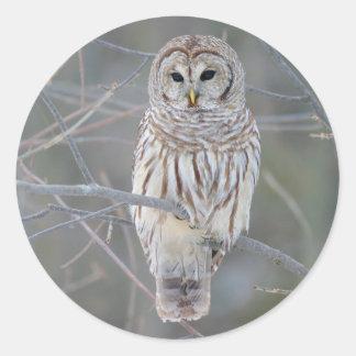 Barred Owl Strix Varia Classic Round Sticker