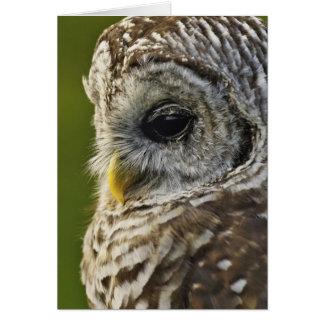 Barred Owl, Strix varia, Michigan Card