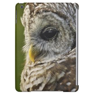 Barred Owl, Strix varia, Michigan Cover For iPad Air