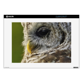 Barred Owl, Strix varia, Michigan Decals For Laptops