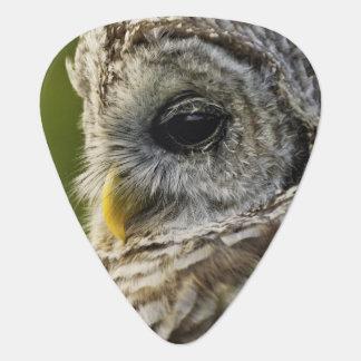 Barred Owl, Strix varia, Michigan Guitar Pick