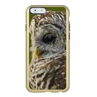 Barred Owl, Strix varia, Michigan Incipio Feather Shine iPhone 6 Case