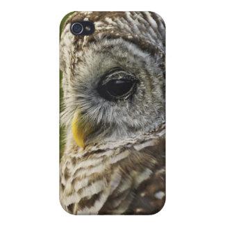 Barred Owl, Strix varia, Michigan iPhone 4 Case