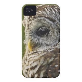 Barred Owl, Strix varia, Michigan iPhone 4 Cover