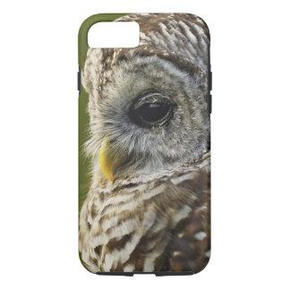 Barred Owl, Strix varia, Michigan iPhone 8/7 Case