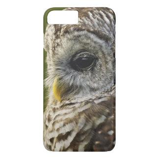 Barred Owl, Strix varia, Michigan iPhone 8 Plus/7 Plus Case
