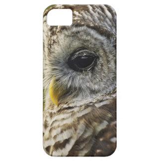 Barred Owl, Strix varia, Michigan iPhone SE/5/5s Case
