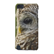 Barred Owl, Strix varia, Michigan iPod Touch 5G Case