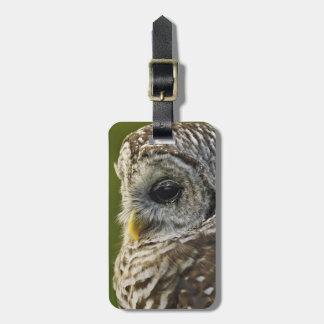 Barred Owl, Strix varia, Michigan Luggage Tag