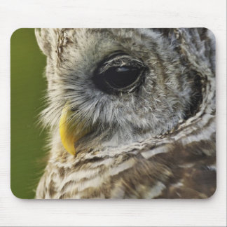 Barred Owl, Strix varia, Michigan Mouse Pad