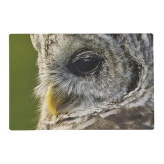 Barred Owl, Strix varia, Michigan Placemat