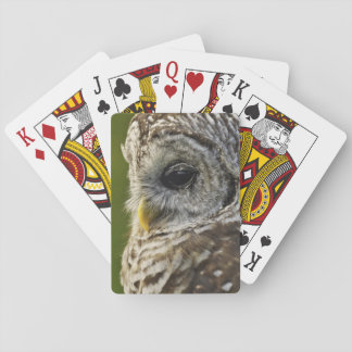 Barred Owl, Strix varia, Michigan Playing Cards