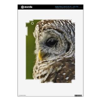 Barred Owl, Strix varia, Michigan iPad 3 Decals